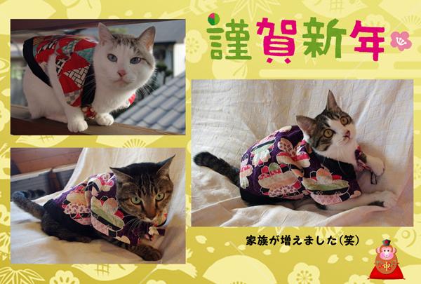 2016猫.jpg